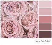 A background of faded pink roses in a colour palette, with complimentary colour swatches