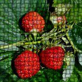 Fondo abstracto con bayas de jardín