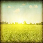 stock photo of grassland  - Vintage photo of green grass field at sunset - JPG