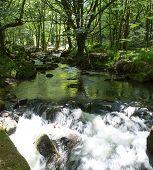 Golitha Falls Bodmin Moor Cornwall