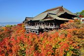 KYOTO - NOVEMBER 19: Kiyomizu-dera stage with fall colors November 19, 2012 in Kyoto, JP. Founded in