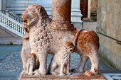 Lion Column Of Colleoni Chapel In Bergamo
