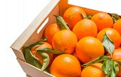 pic of valencia-orange  - Wooden box of spanish oranges freshly collected on white background - JPG