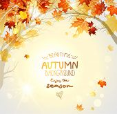 Beautiful autumn background with branches. Nature background with copy space.