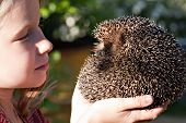 Little Girl With Cute European Hedgehog