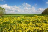 Crimea, Yellow Glade Two