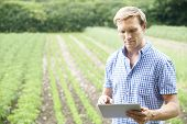 image of farmers  - Farmer On Organic Farm Using Digital Tablet - JPG