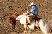 picture of brahma-bull  - Saddle bronc riding rodeo competition - JPG