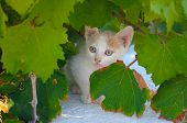 A little kitty behind the leaf