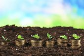 Business concept: golden coins in soil with young plants on nature background