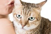 Cute tabby cat in the hands of a woman, on the white background.