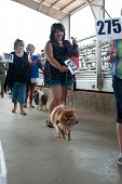 Contestants Parade Their Dogs For Judging At Dog Festival