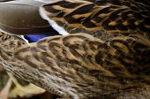 Nature Abstract - Feather Pattern