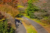 Couple Riding Bicycle In Autumn Color Park