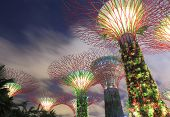 Gardens by the bay Supertree Grove Singapore