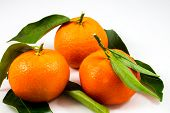 Three Sweet Tangerines
