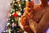 Red cat in hands near Christmas tree