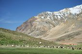 A Lot Of Sheep And Goats In Mountain Valley