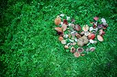 stock photo of edible mushroom  - A high angle view of a large group of picked edible and inedible wild forest mushrooms arranged in a heart shape on green grass - JPG