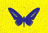 Blue Butterfly On Yellow Background.