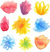 Vector set of bright watercolor floral blossoms