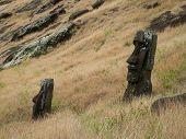 Moai In Grasses