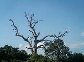 Birds On Big Tree
