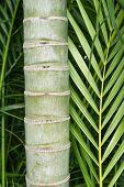 Постер, плакат: Bamboo Fragment