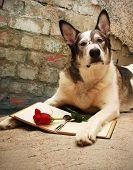 Large Dog Reading