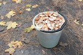 Bucket of mushrooms.