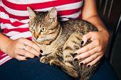 Close Up Portrait Tabby Male Kitten Cat