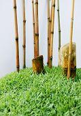 Mini Bamboo