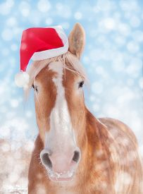 stock photo of horse wearing santa hat  - Dreamy image of a Belgian draft horse wearing a Santa hat - JPG