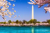 picture of washington monument  - Washington - JPG