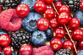 Постер, плакат: Different Fresh Berries