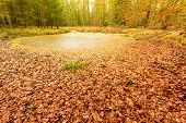 stock photo of swamps  - swamp landscape bog forest with standing water - JPG