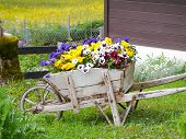 pic of wheelbarrow  - An old wheelbarrow full of flowers next to a barn in Grindelwald Switzerland - JPG