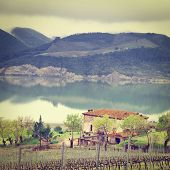 stock photo of apennines  - Vineyard on the Shore of Italian Lake Corbara in a Rainy Day Instagram Effect - JPG