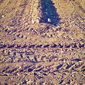 image of shoot out  - Young Shoots Planted in the Spring Field in Italy Instagram Effect - JPG