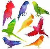 picture of mockingbird  - Parrot Silhouette - JPG