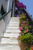 Staircase With Flowers