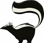 image of skunks  - Skunk on a white background vector illustration - JPG