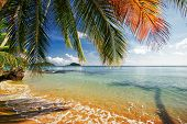 Exotic tropical beach