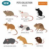 Pets_rodents_rat_1 poster