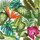 Tropical Leaves Of Palm Trees, Dieffenbachia And Flowers Bird Of Paradise Strelitzia . Summer Exotic poster