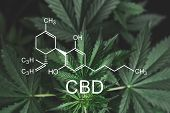 Cbd Formula Cannabidiol. Cannabinoids And Health, Medical Marijuana, Cbd And Thc Elements In Cannabi poster