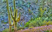 Surreal Saguaros