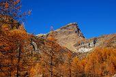 Autumn Trees On Mountain