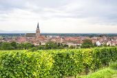 Bergheim (alsace) - Panorama With Vineyard