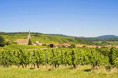 Blienschwiller (alsace) - Vineyards